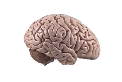 Neuroplasticity: Helping Struggling Readers