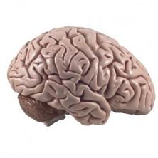 Neuroplasticity-Helping-Struggling-Readers1