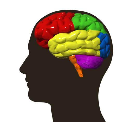 Neuroplasticity discovery