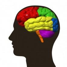 Neuroplasticity1