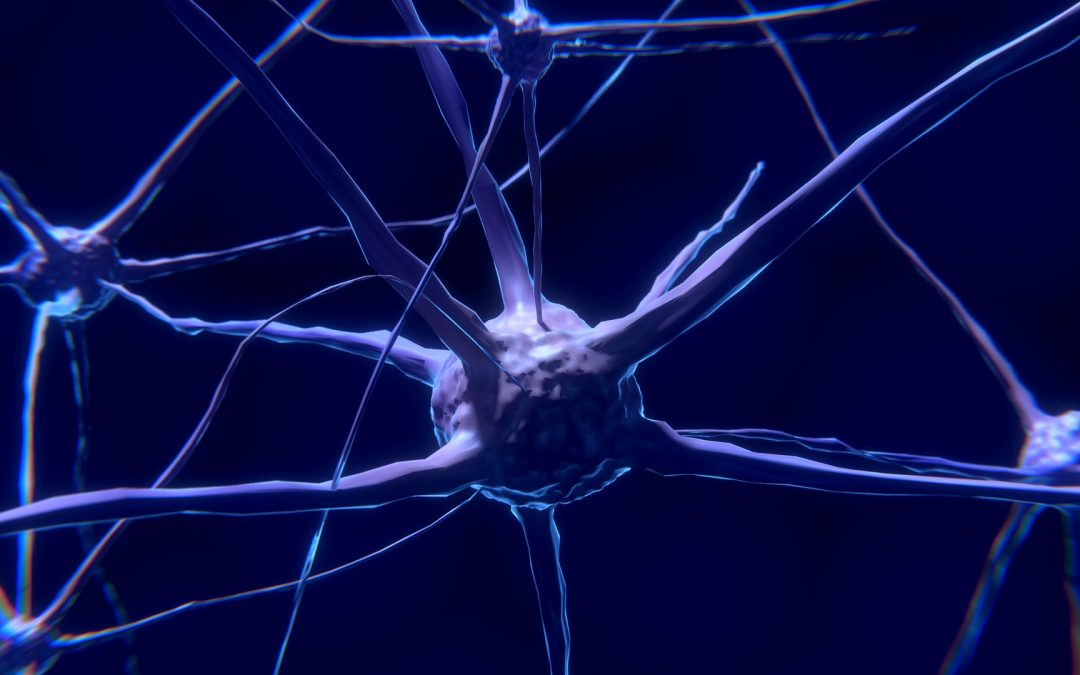 About The Neuroplasticity Discovery